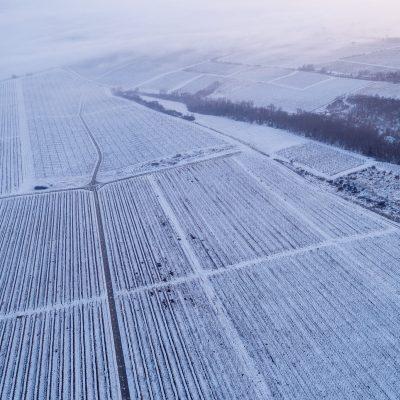 Behavazott szőlőtőkék Palkonya közelében 2018. december 20-án.