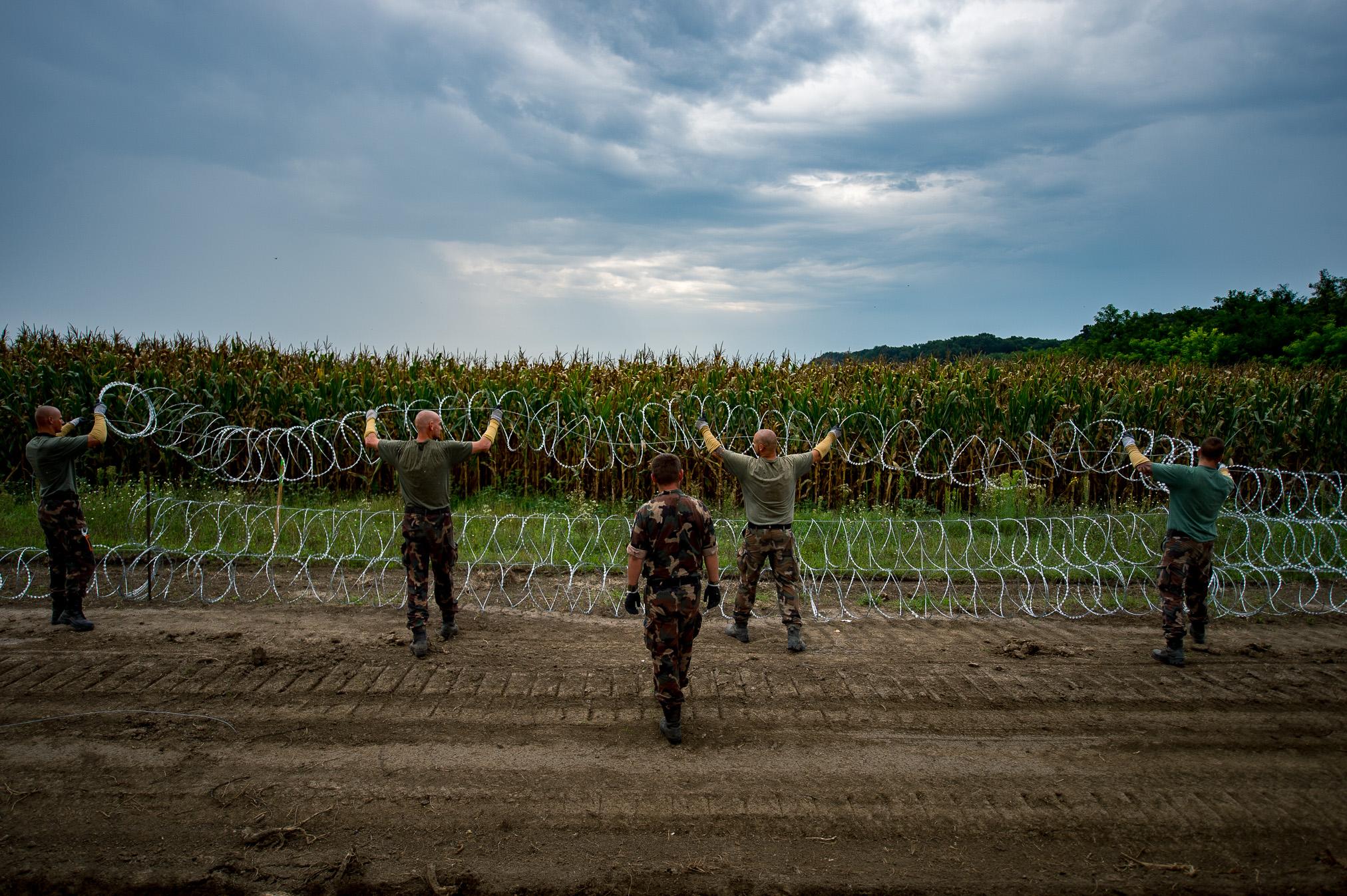 Katonák dolgoznak a szerb-magyar határzárnál a gyorstelepítésű drótakadályon Hercegszántó közelében 2015. augusztus 25-én.